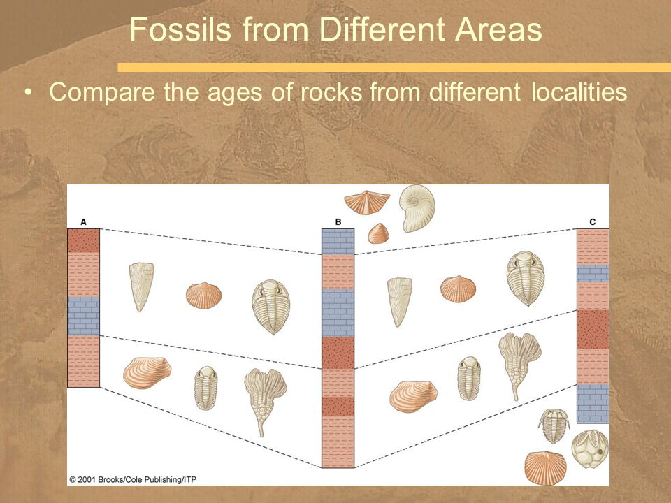 Compare the ages of rocks from different localities Fossils from Different Areas