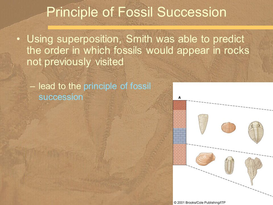 Using superposition, Smith was able to predict the order in which fossils would appear in rocks not previously visited Principle of Fossil Succession