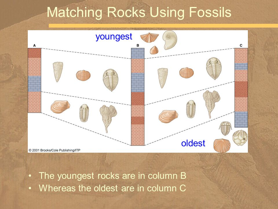 The youngest rocks are in column B Whereas the oldest are in column C Matching Rocks Using Fossils youngest oldest
