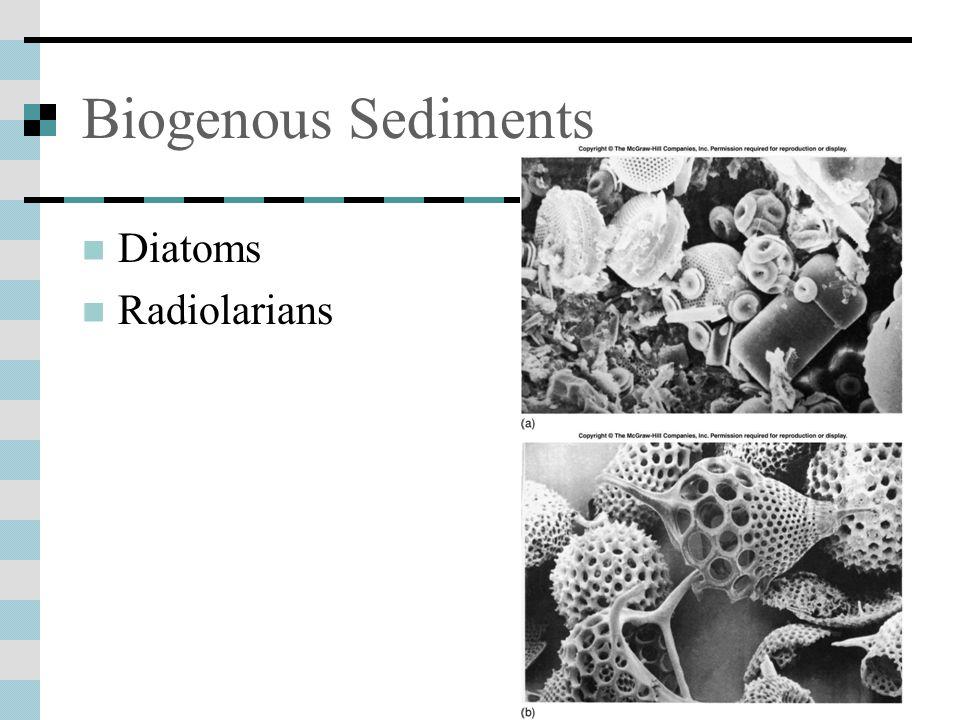 Biogenous Sediments Diatoms Radiolarians