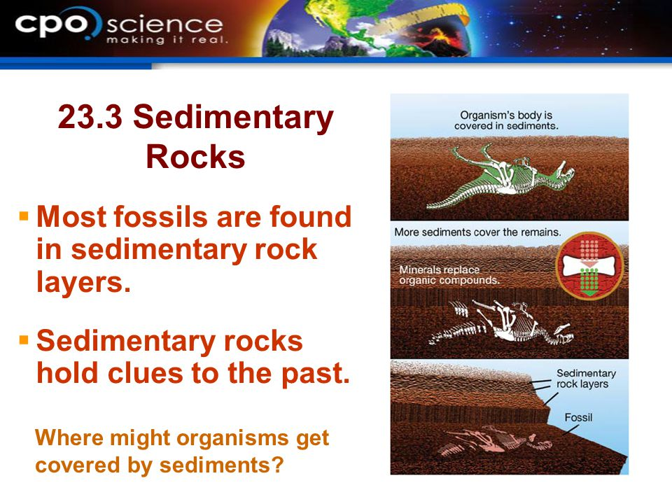 23.3 Interpreting layers of sediment  Sedimentary rocks hold clues to their past.