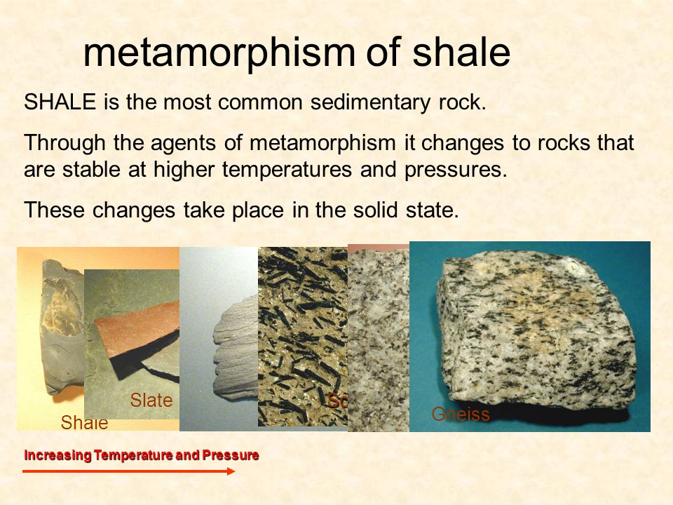 Shale metamorphism of shale SHALE is the most common sedimentary rock.