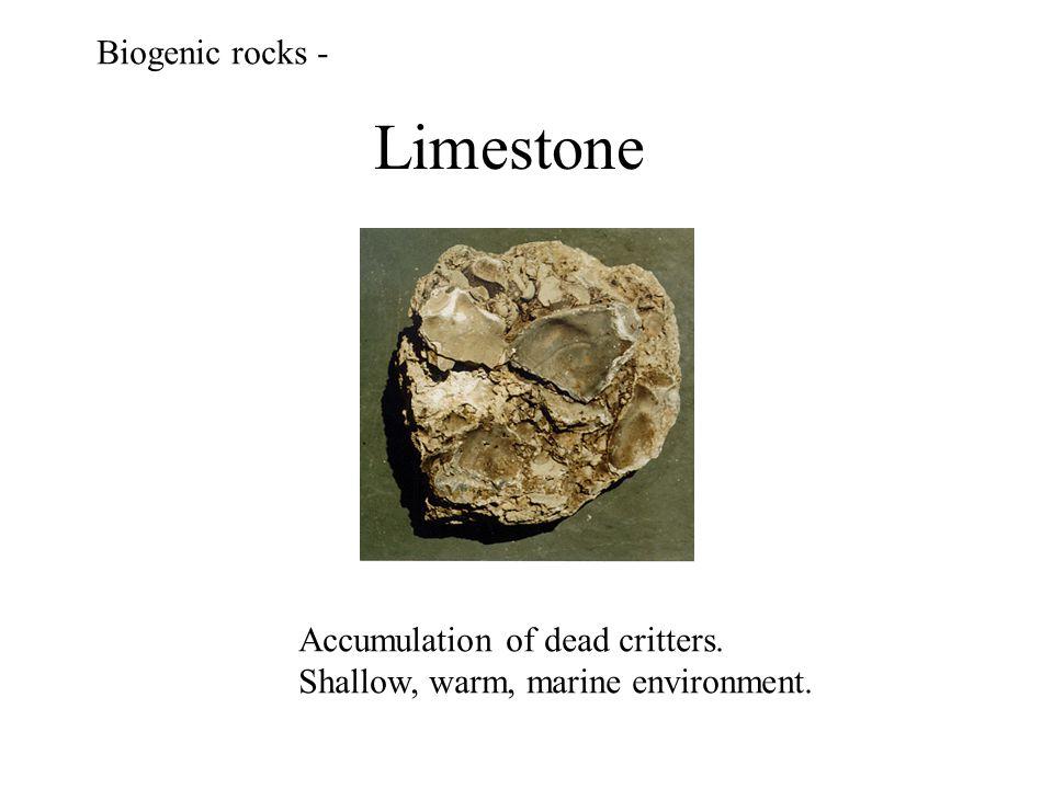 Limestone Biogenic rocks - Accumulation of dead critters. Shallow, warm, marine environment.