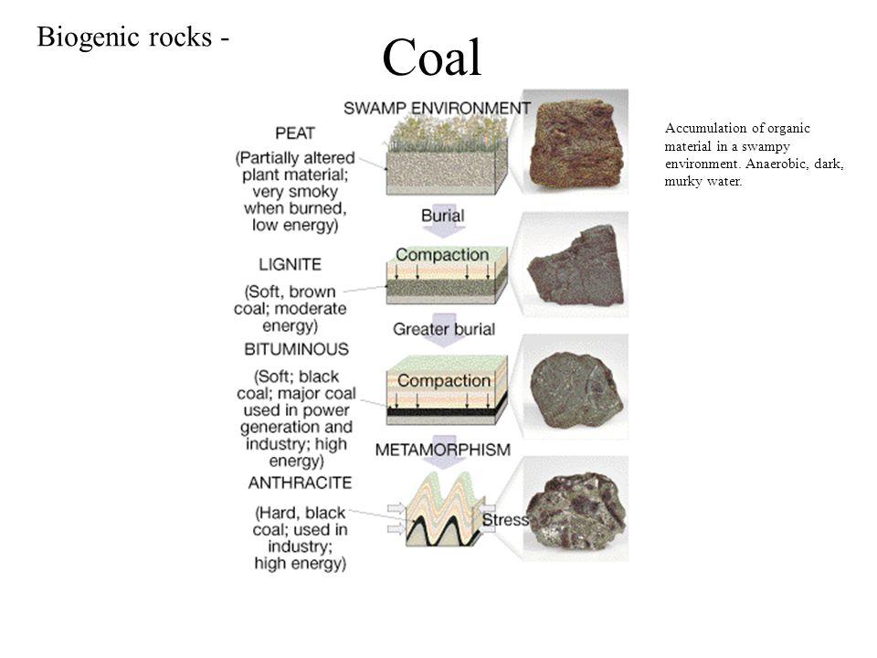 Coal Accumulation of organic material in a swampy environment. Anaerobic, dark, murky water. Biogenic rocks -