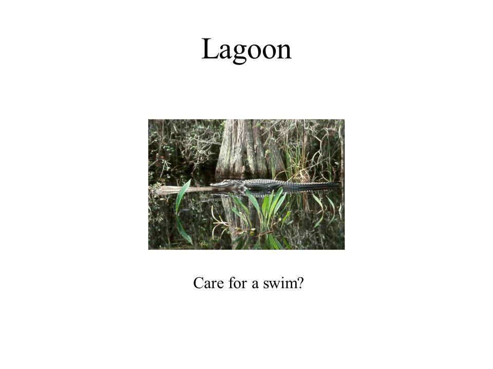 Lagoon Care for a swim