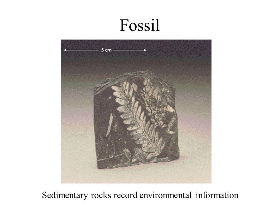 Fossil Sedimentary rocks record environmental information