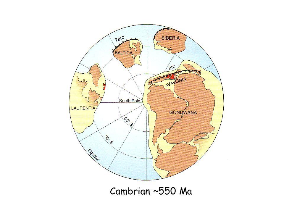 Cambrian ~550 Ma