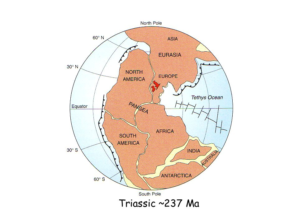 Triassic ~237 Ma