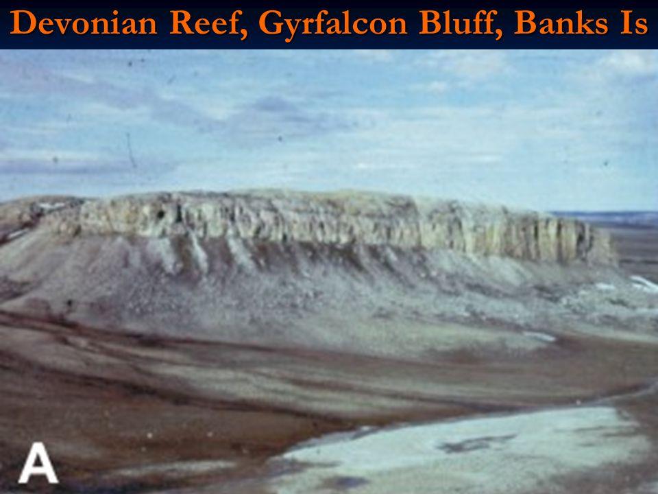 Devonian Reef, Gyrfalcon Bluff, Banks Is