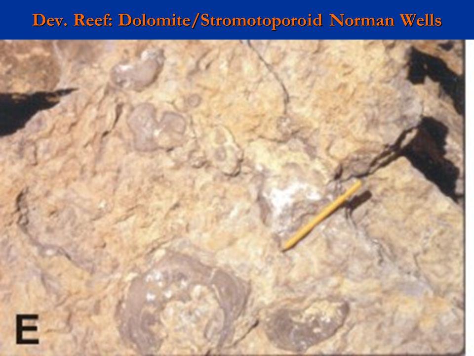 Dev. Reef: Dolomite/Stromotoporoid Norman Wells