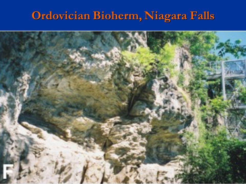 Ordovician Bioherm, Niagara Falls