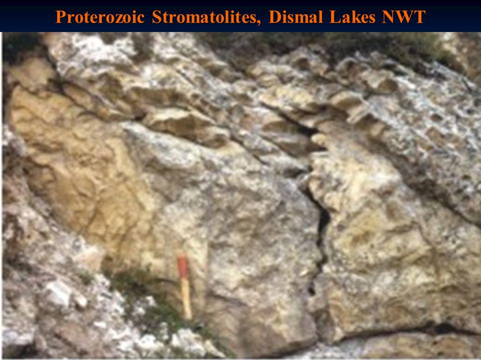 Proterozoic Stromatolites, Dismal Lakes NWT