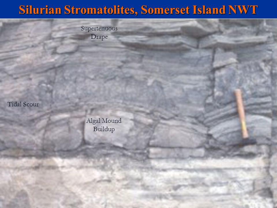 Silurian Stromatolites, Somerset Island NWT Tidal Scour Algal Mound Buildup Supertenuous Drape