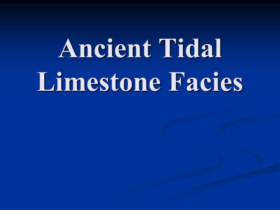 Ancient Tidal Limestone Facies