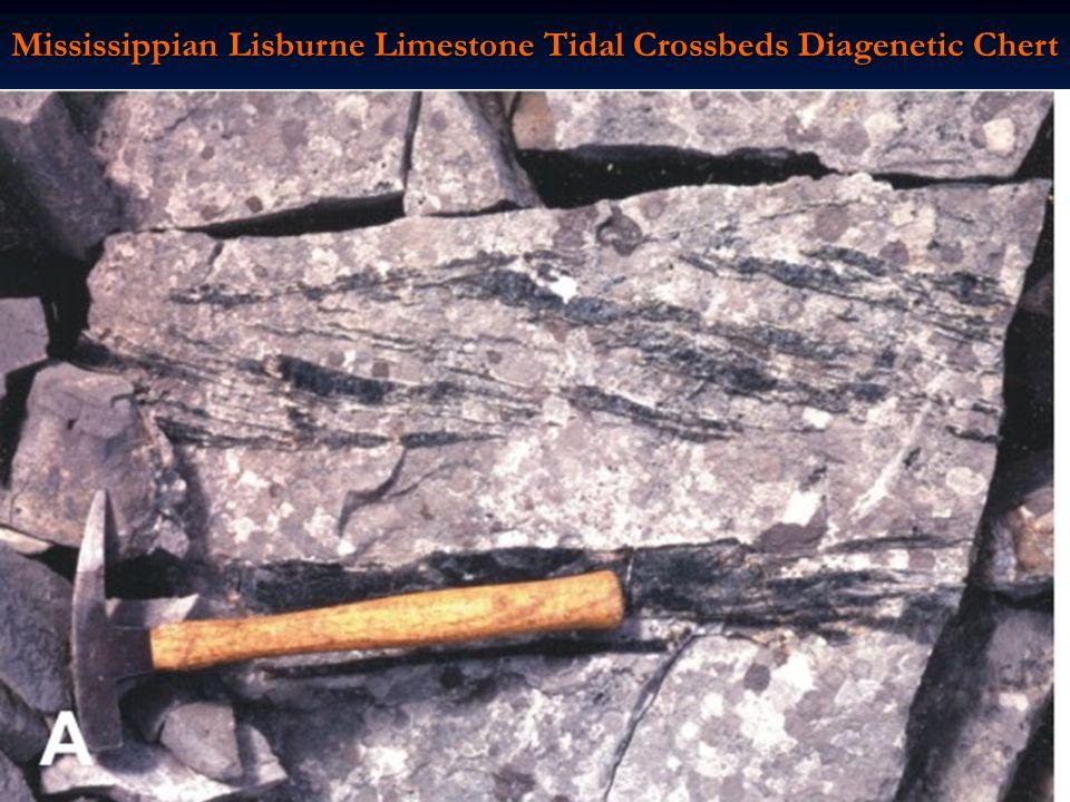 Mississippian Lisburne Limestone Tidal Crossbeds Diagenetic Chert