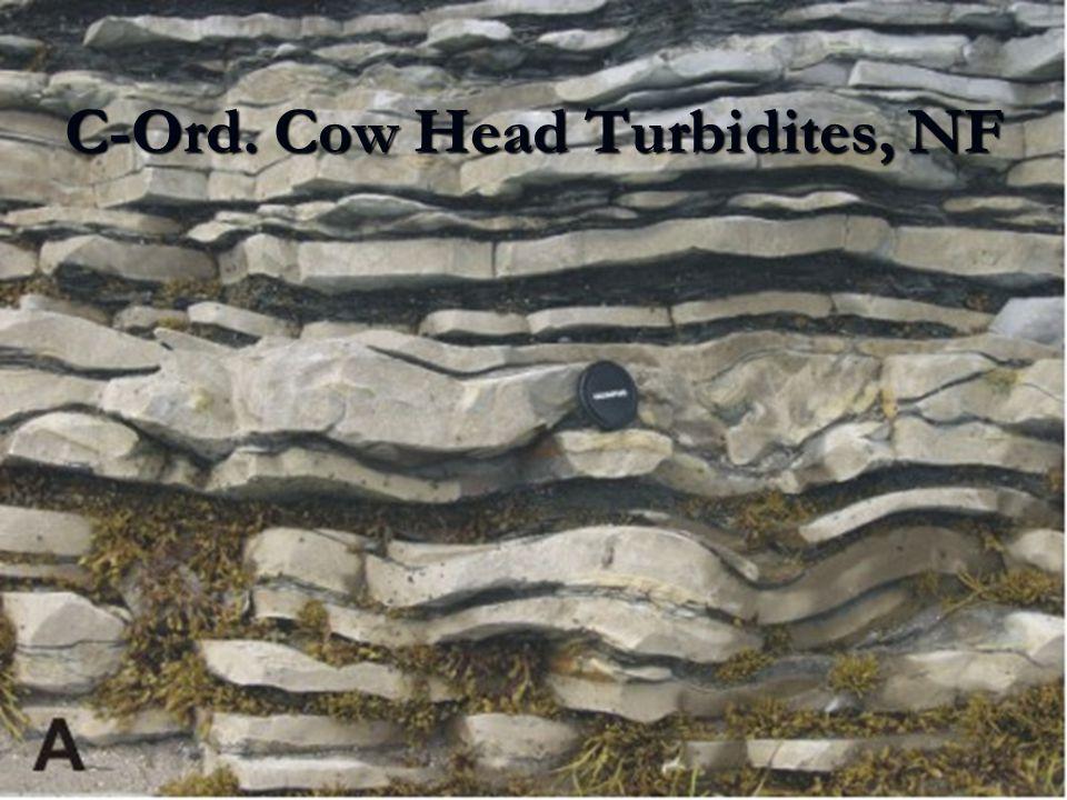 C-Ord. Cow Head Turbidites, NF