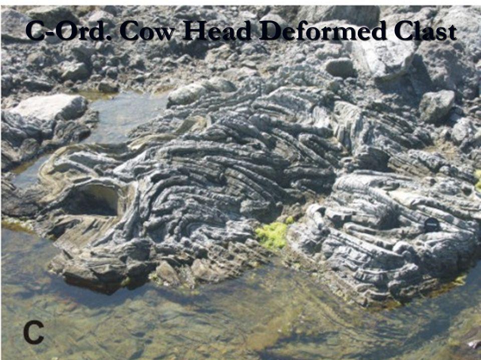 C-Ord. Cow Head Deformed Clast