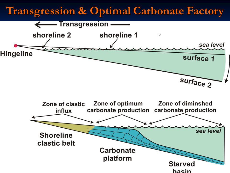 Transgression & Optimal Carbonate Factory