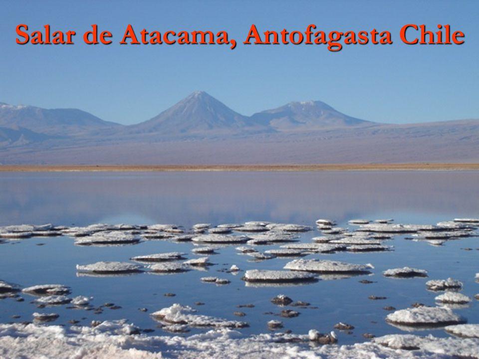 Salar de Atacama, Antofagasta Chile
