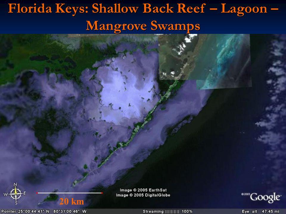 Florida Keys: Shallow Back Reef – Lagoon – Mangrove Swamps 20 km