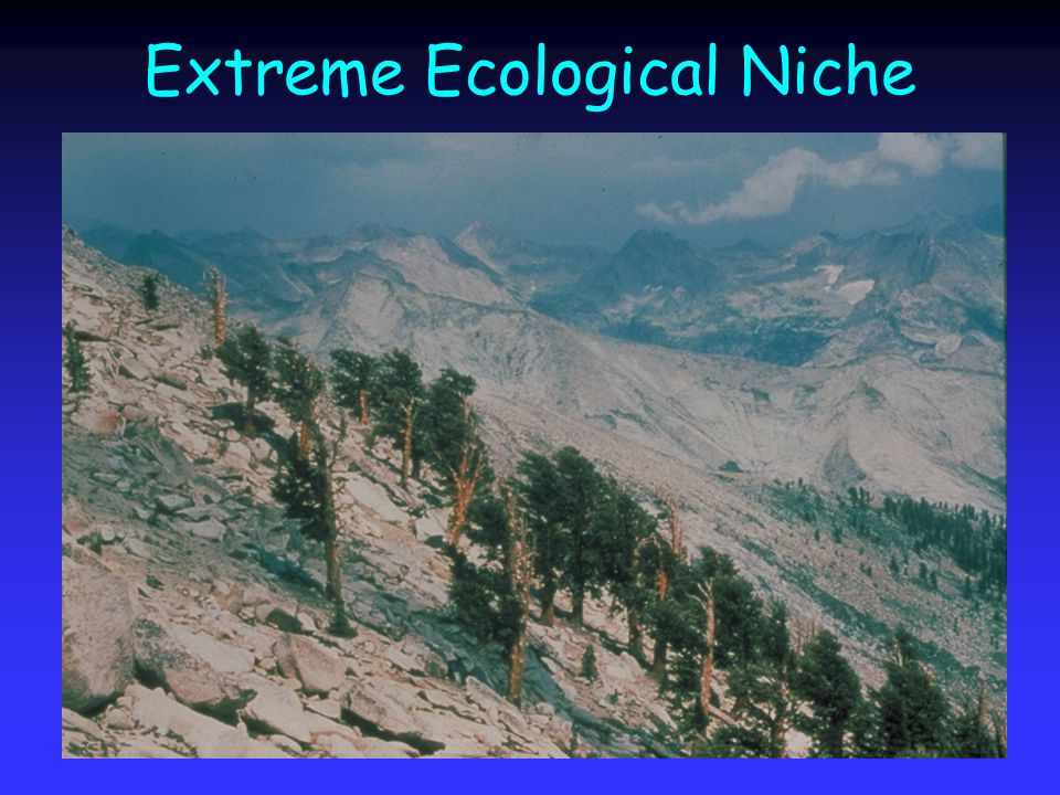 Extreme Ecological Niche