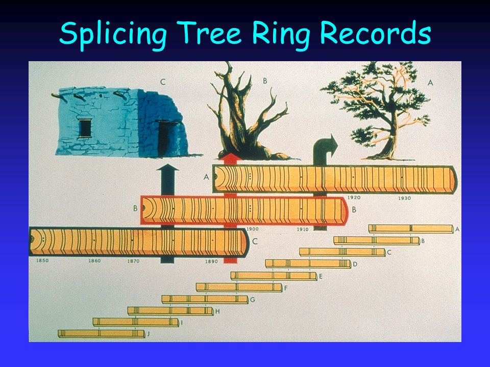 Splicing Tree Ring Records