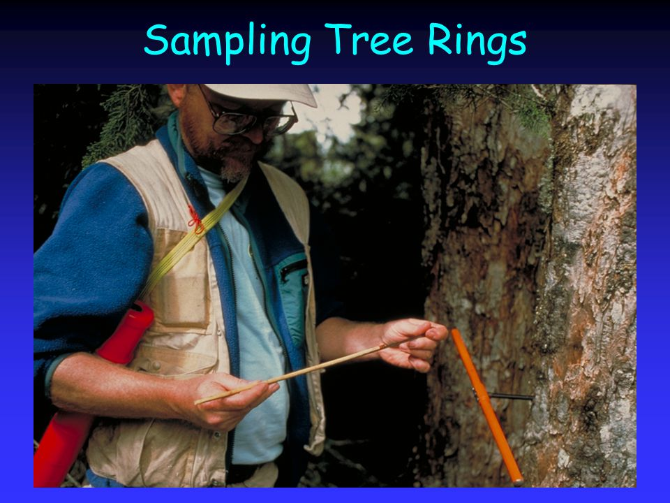 Sampling Tree Rings