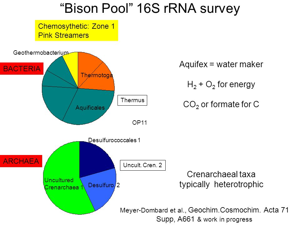 Bison Pool 16S rRNA survey Aquificales Thermotoga Geothermobacterium Thermus OP11 Desulfurococcales 1 Uncultured Crenarchaea 1 BACTERIA Desulfuro.