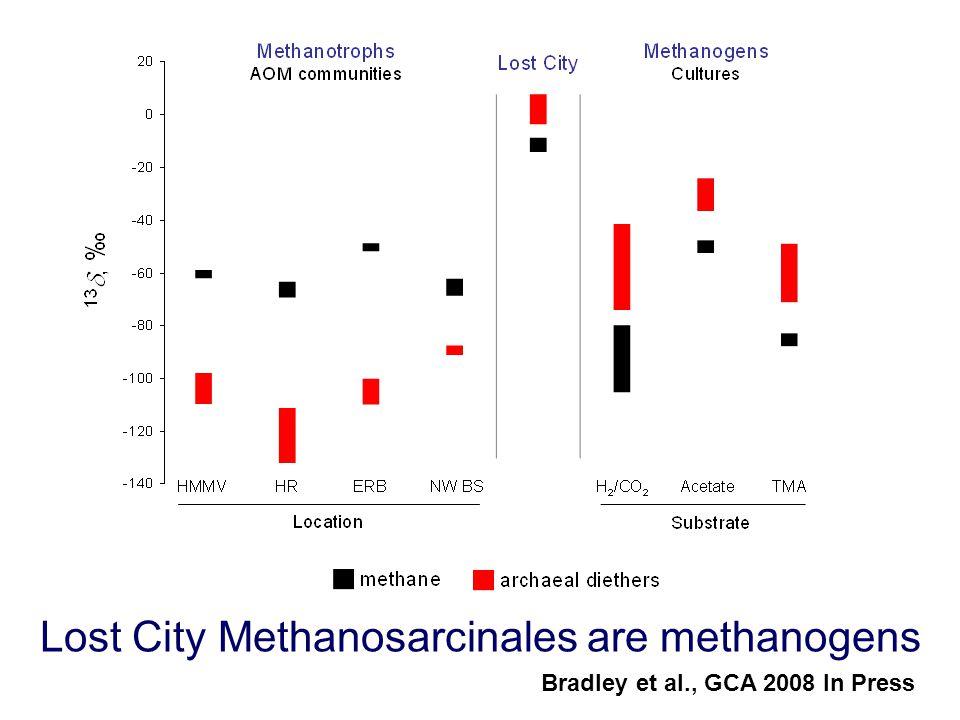 Lost City Methanosarcinales are methanogens Bradley et al., GCA 2008 In Press