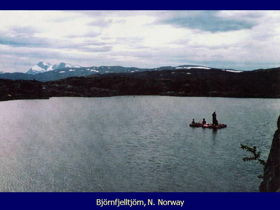 Björnfjelltjörn, N. Norway