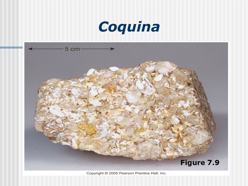 Coquina Figure 7.9