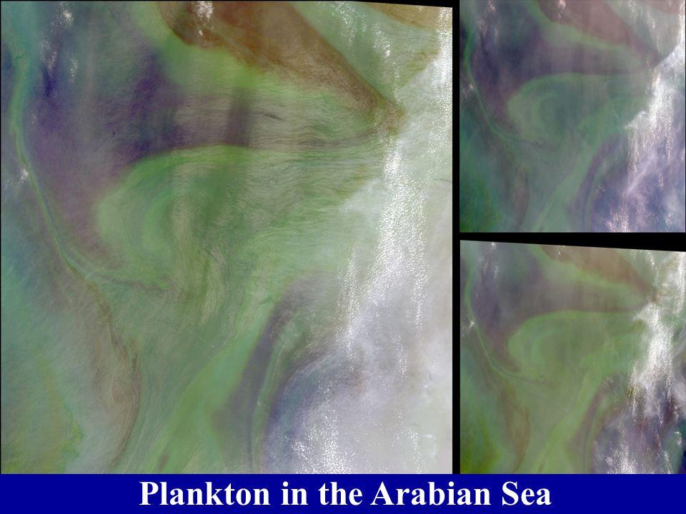 Oil Forms from Plankton Remains diatom coccolithophore radiolarian foramifera