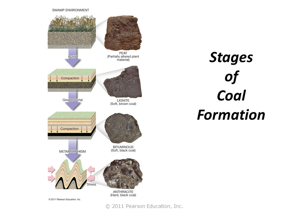 © 2011 Pearson Education, Inc. Stages of Coal Formation