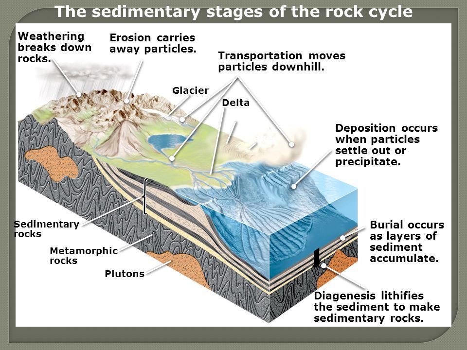 Sedimentary rocks Metamorphic rocks Plutons Desert Playa lake Delta Glacier The sedimentary stages of the rock cycle Weathering breaks down rocks.