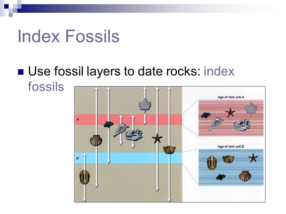 Index Fossils Use fossil layers to date rocks: index fossils