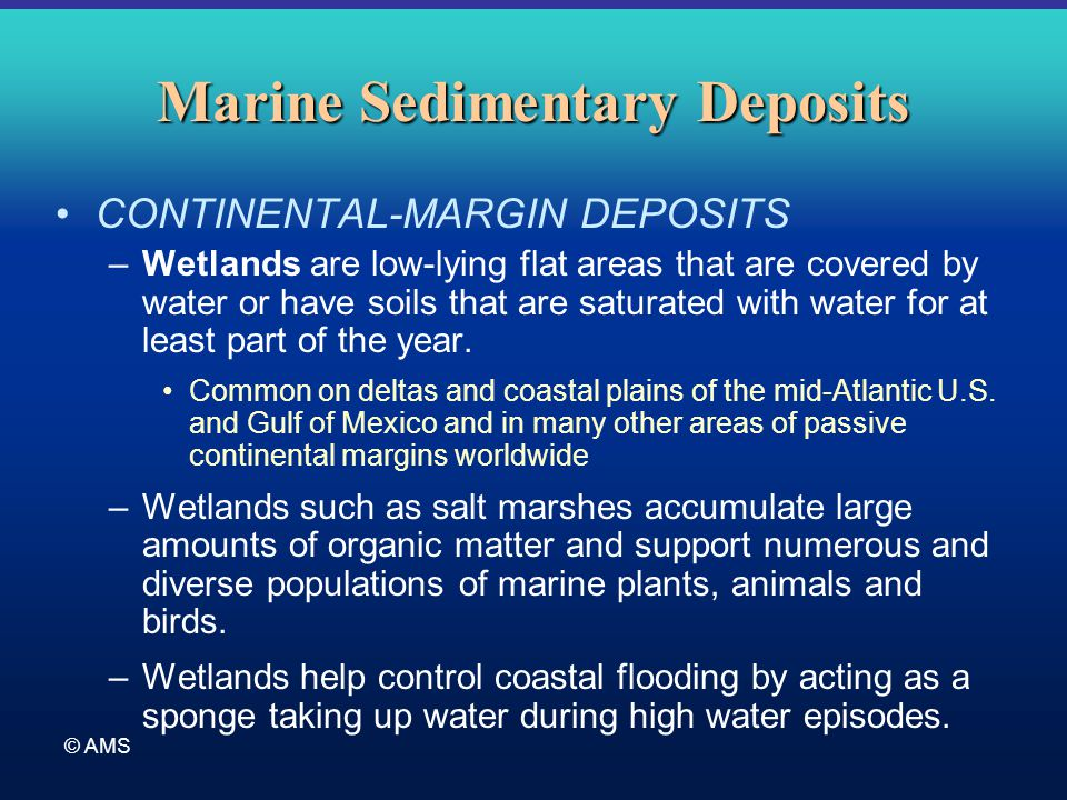 © AMS Marine Sedimentary Deposits CONTINENTAL-MARGIN DEPOSITS –Wetlands are low-lying flat areas that are covered by water or have soils that are satu
