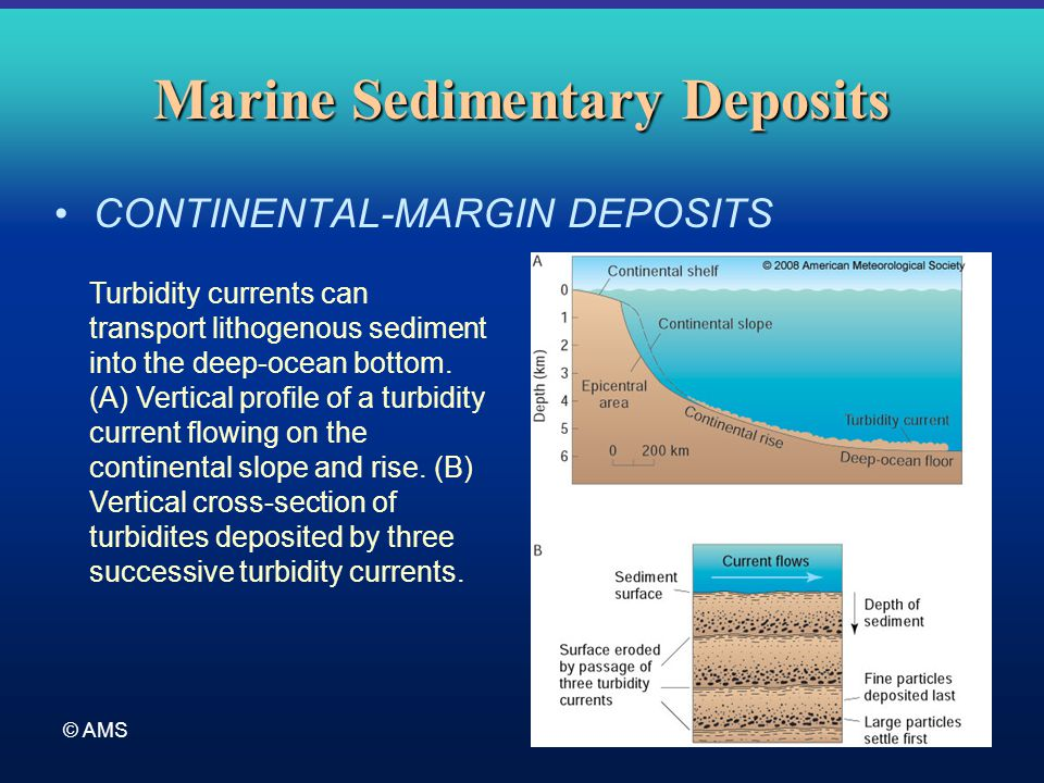 © AMS Marine Sedimentary Deposits CONTINENTAL-MARGIN DEPOSITS Turbidity currents can transport lithogenous sediment into the deep-ocean bottom. (A) Ve