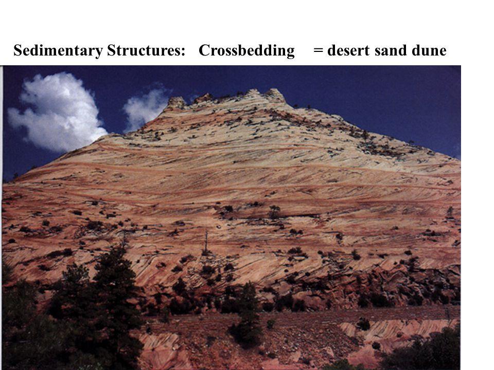 Some common Sedimentary Rocks you will have to learn. Sandstone*Limestone (chalk) Conglomerate* Siltstone Breccia* Shale* Mudstone* Chert* Coal* Rock