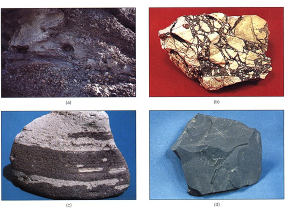 Sedimentary Structures: Fossils= environment, age, comparison