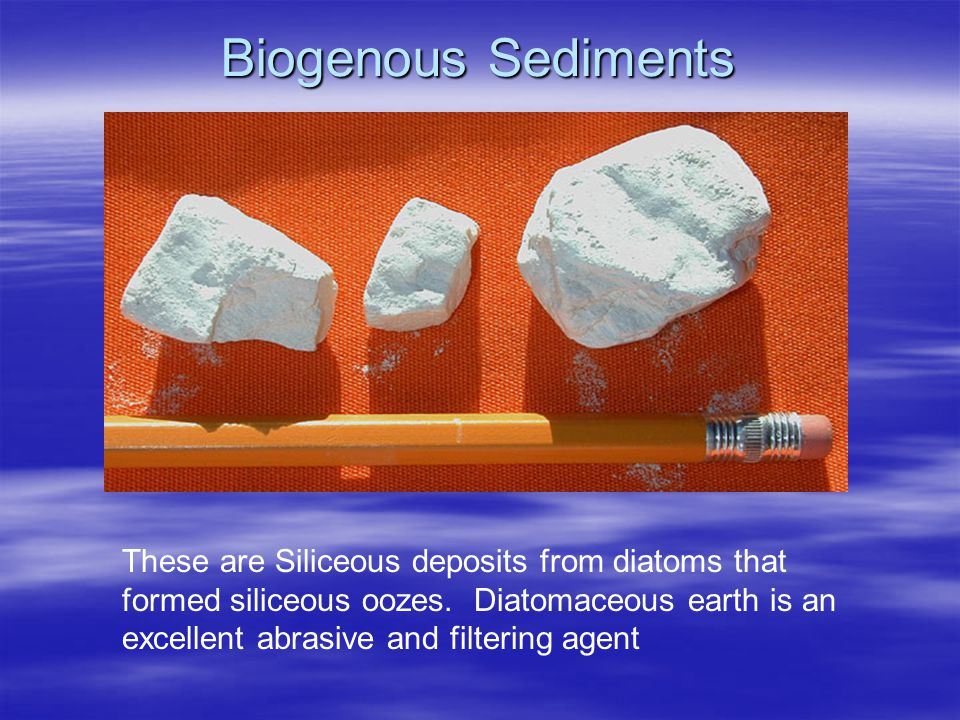 Biogenous Sediments These are Siliceous deposits from diatoms that formed siliceous oozes.
