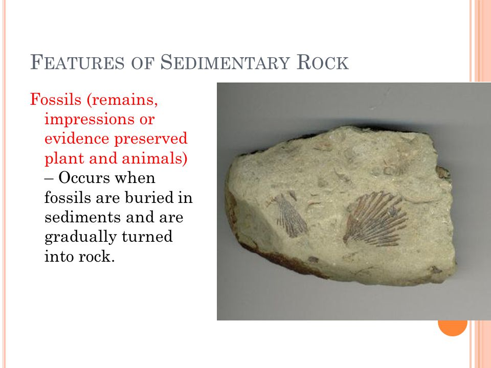 F EATURES OF S EDIMENTARY R OCK Fossils (remains, impressions or evidence preserved plant and animals) – Occurs when fossils are buried in sediments and are gradually turned into rock.