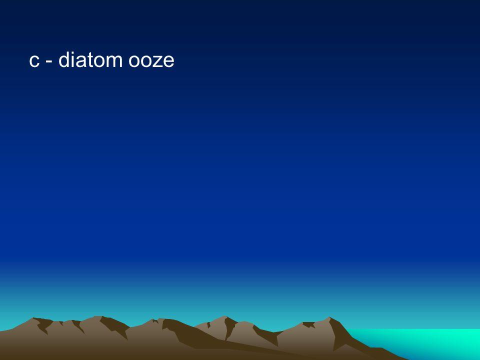 c - diatom ooze