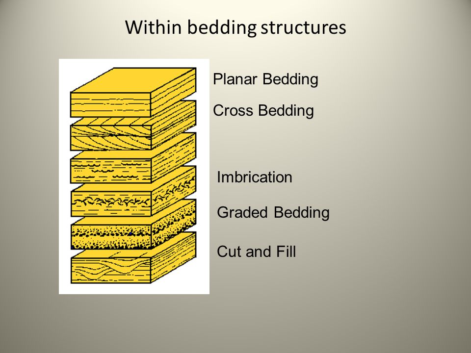 Within bedding structures Planar Bedding Cross Bedding Imbrication Graded Bedding Cut and Fill