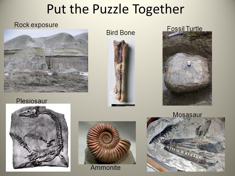 Put the Puzzle Together Rock exposure Fossil Turtle Ammonite Mosasaur Bird Bone Plesiosaur