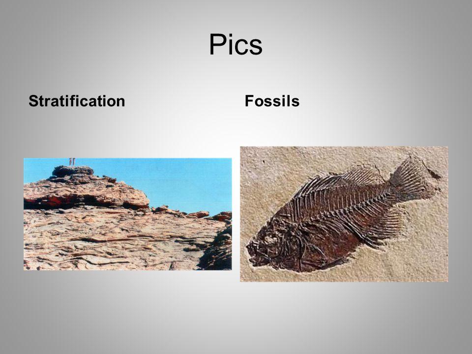 Pics StratificationFossils