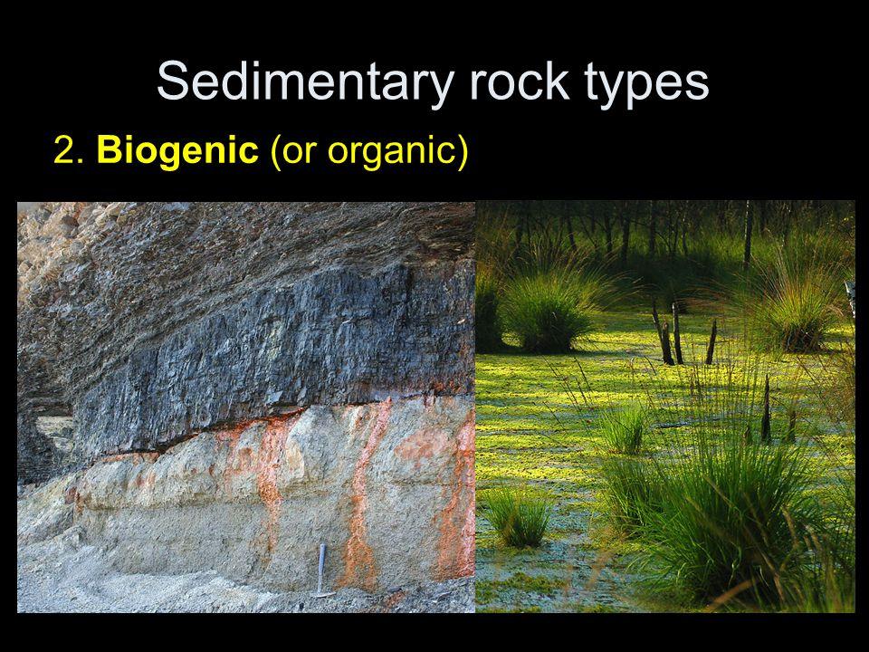 Sedimentary rock types 2. Biogenic (or organic)