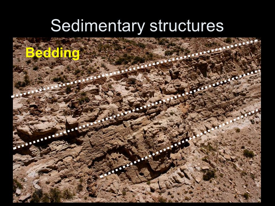 Sedimentary structures Bedding