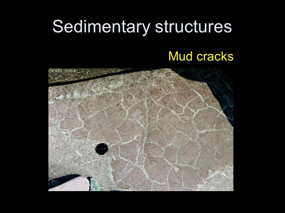 Sedimentary structures Mud cracks