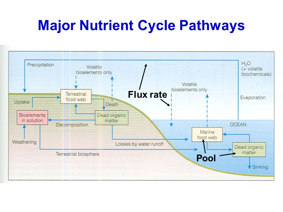Major Nutrient Cycle Pathways Pool Flux rate