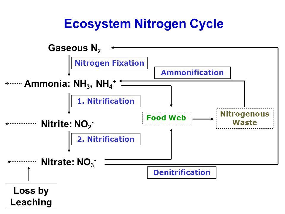 Gaseous N 2 Nitrogen Fixation Ammonia: NH 3, NH 4 + Food Web 1. Nitrification Nitrite: NO 2 - 2. Nitrification Nitrate: NO 3 - Denitrification Nitroge